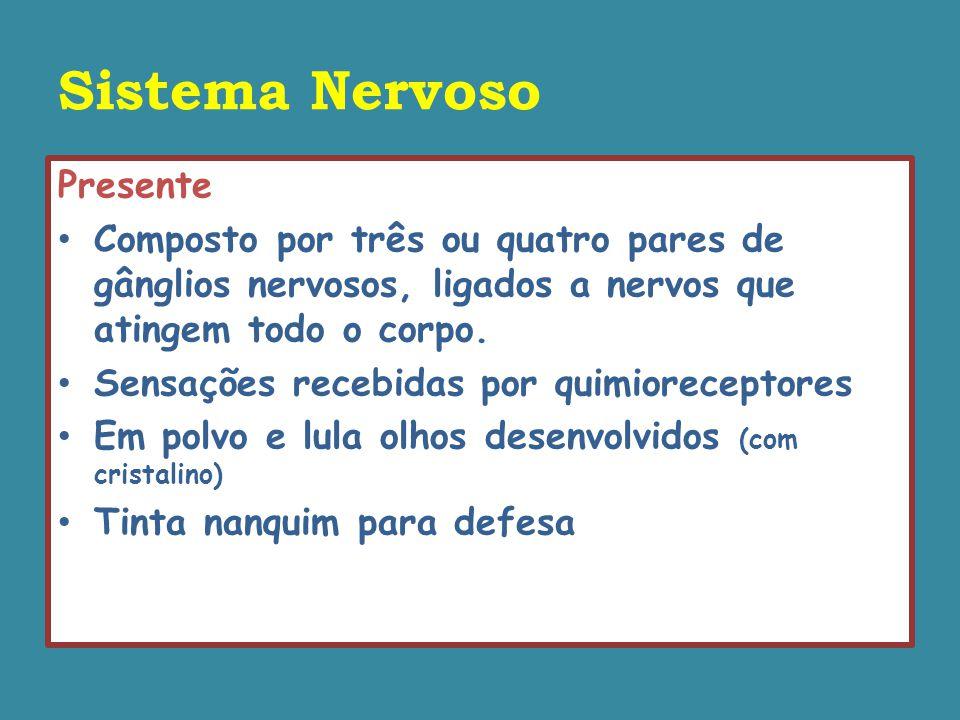 Sistema Nervoso Presente Composto por três ou quatro pares de gânglios nervosos, ligados a nervos que atingem todo o corpo.