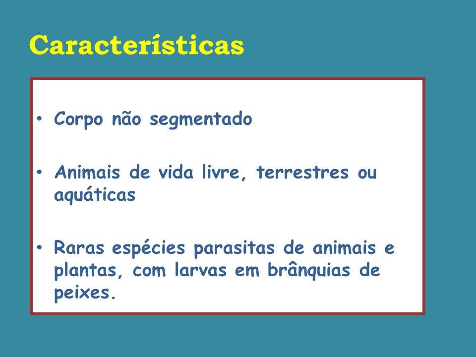 Classificação Classe Bivalvia Classe Gastropoda Classe Cephalopoda Classe Polyplacophora Classe Monoplacophora Classe Scaphopoda