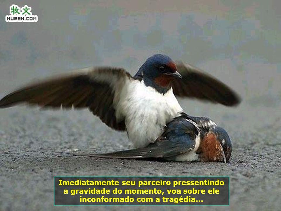 Fim de tarde, os passarinhos saem a voar atrás de alimento e nessa busca inocente, um deles é atropelado por um veículo, quando comia os grãozinhos pe