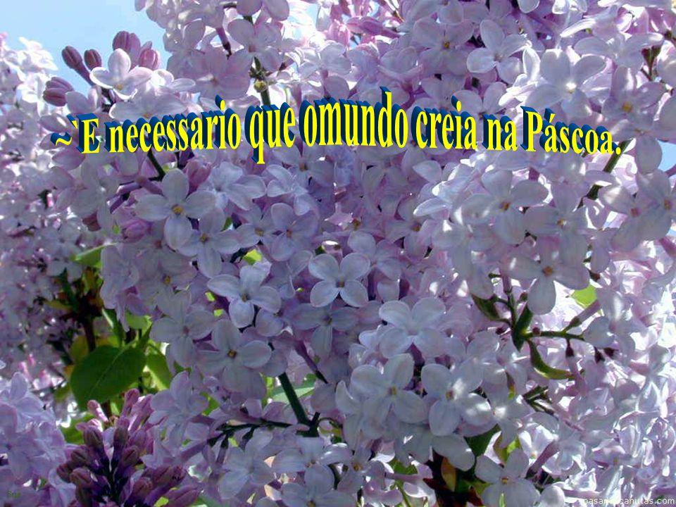 …das trevas que cobrem nossa pouca fé, como aconteceu na primeira Páscoa com a victoria de Jesús sobre o pecado e sobre a morte.