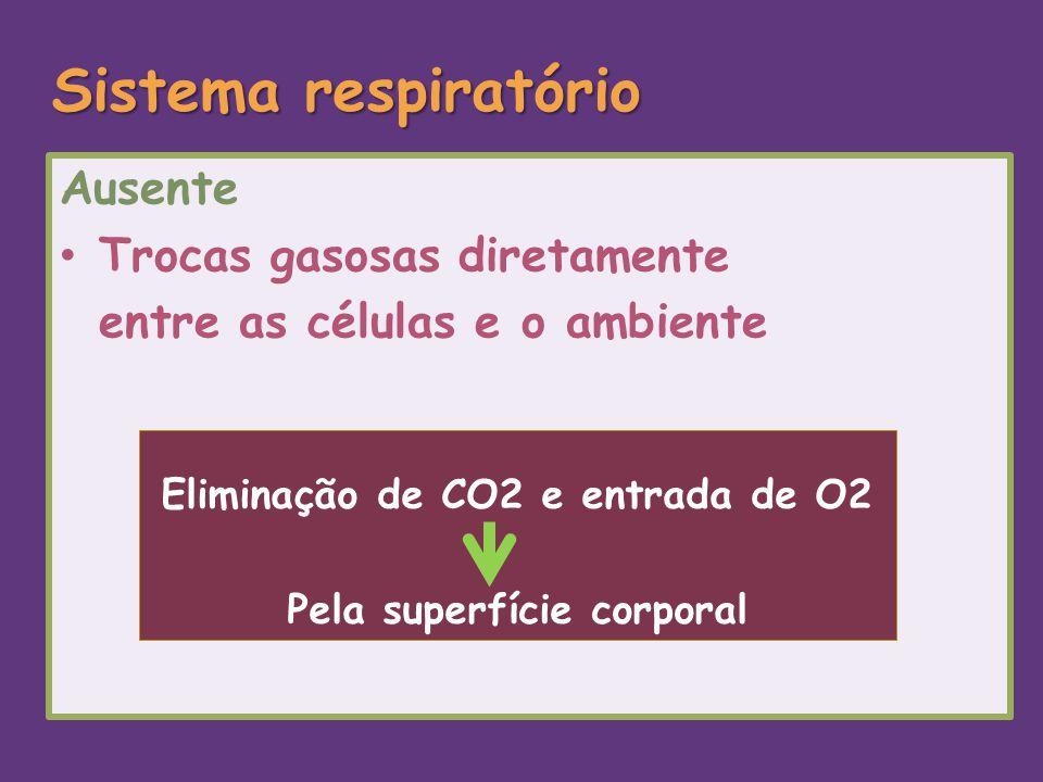 Sistema respiratório Ausente Trocas gasosas diretamente entre as células e o ambiente Eliminação de CO2 e entrada de O2 Pela superfície corporal