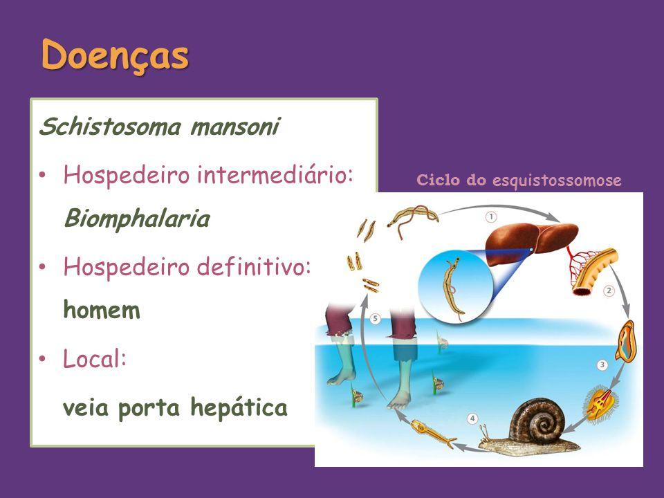 Doenças Schistosoma mansoni Hospedeiro intermediário: Biomphalaria Hospedeiro definitivo: homem Local: veia porta hepática Ciclo do esquistossomose