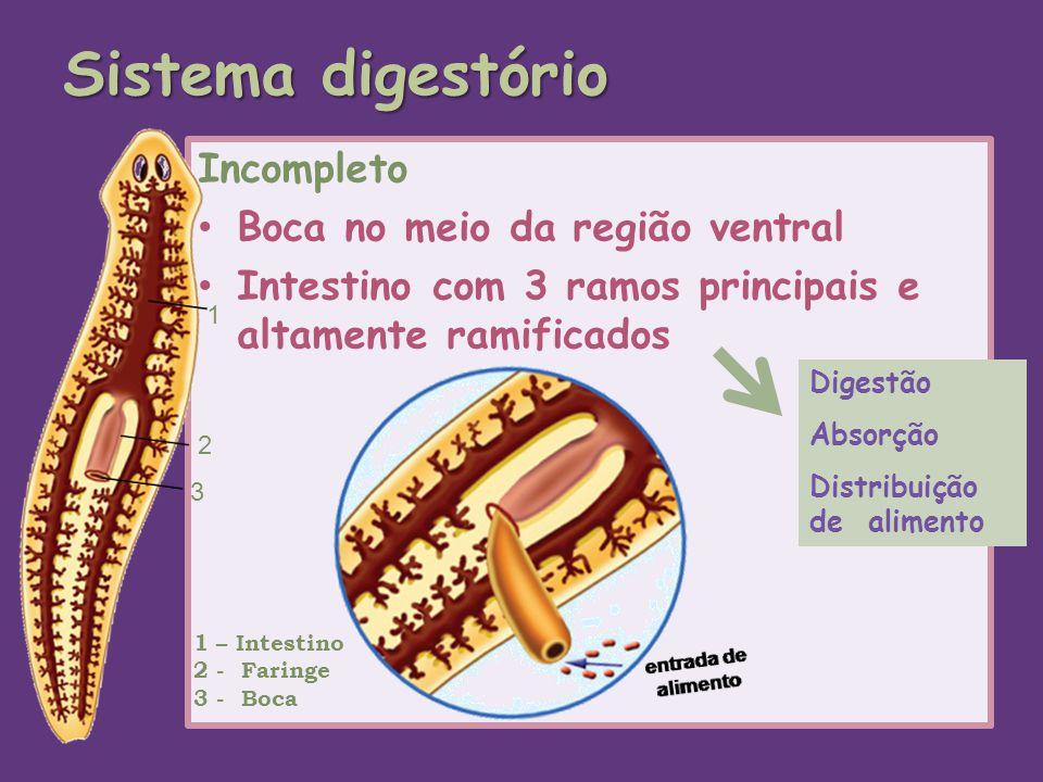 Sistema digestório Incompleto Boca no meio da região ventral Intestino com 3 ramos principais e altamente ramificados Digestão Absorção Distribuição d
