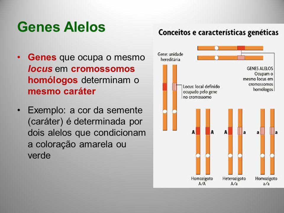 Genes Alelos Genes que ocupa o mesmo locus em cromossomos homólogos determinam o mesmo caráter Exemplo: a cor da semente (caráter) é determinada por d
