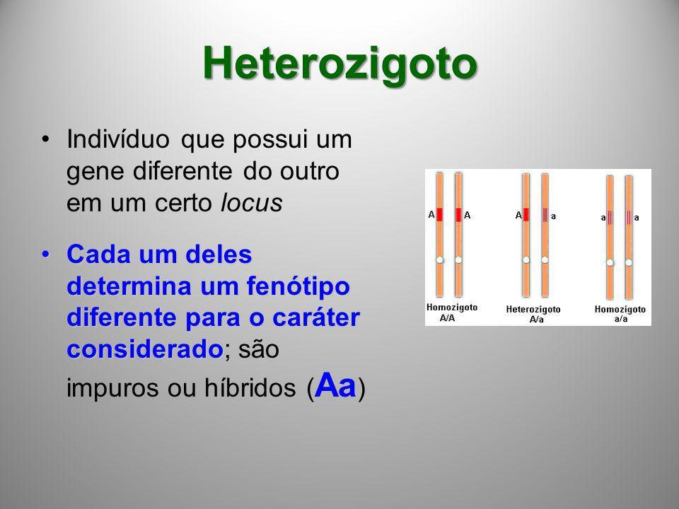 Heterozigoto Indivíduo que possui um gene diferente do outro em um certo locus Cada um deles determina um fenótipo diferente para o caráter considerad