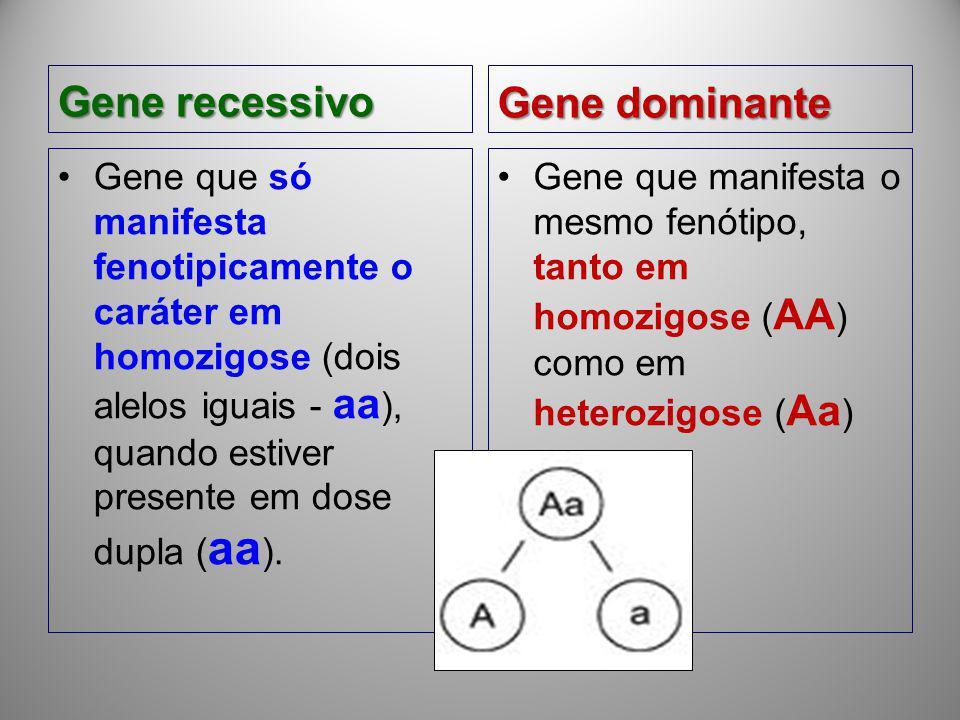 Gene recessivo Gene que só manifesta fenotipicamente o caráter em homozigose (dois alelos iguais - aa ), quando estiver presente em dose dupla ( aa ).