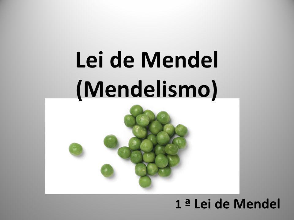 1 ª Lei de Mendel Lei de Mendel (Mendelismo)