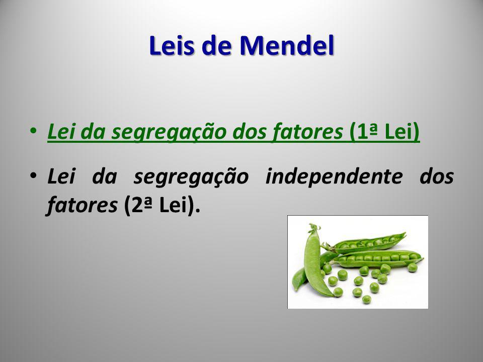 Lei da segregação dos fatores (1ª Lei) Lei da segregação independente dos fatores (2ª Lei). Leis de Mendel