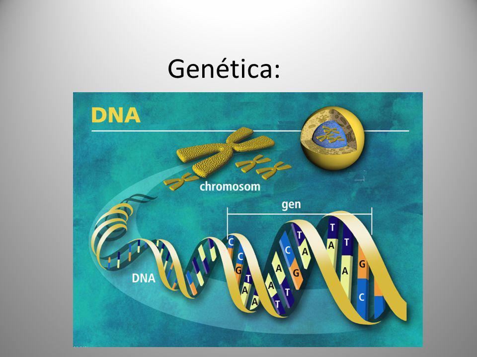Genética: