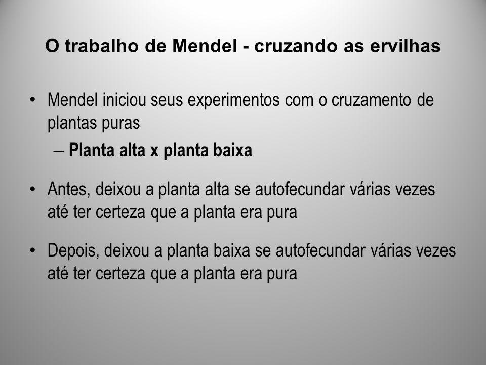 Mendel iniciou seus experimentos com o cruzamento de plantas puras – Planta alta x planta baixa Antes, deixou a planta alta se autofecundar várias vez