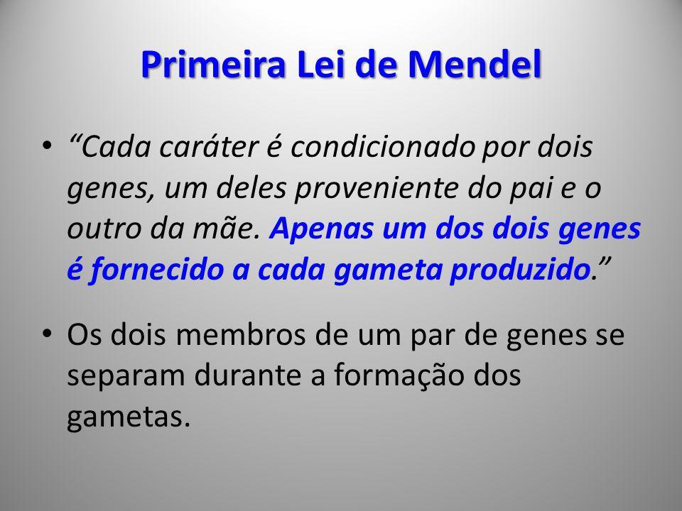 Primeira Lei de Mendel Cada caráter é condicionado por dois genes, um deles proveniente do pai e o outro da mãe. Apenas um dos dois genes é fornecido