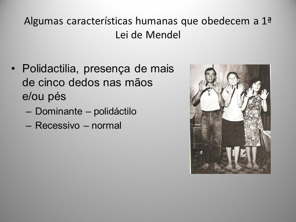 Algumas características humanas que obedecem a 1ª Lei de Mendel Polidactilia, presença de mais de cinco dedos nas mãos e/ou pés –Dominante – polidácti