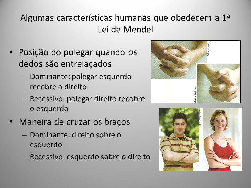 Algumas características humanas que obedecem a 1ª Lei de Mendel Posição do polegar quando os dedos são entrelaçados – Dominante: polegar esquerdo reco