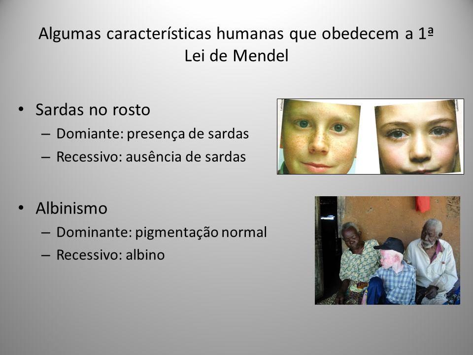 Algumas características humanas que obedecem a 1ª Lei de Mendel Sardas no rosto – Domiante: presença de sardas – Recessivo: ausência de sardas Albinis