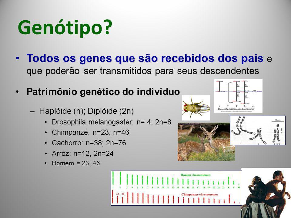 Genótipo? Todos os genes que são recebidos dos paisTodos os genes que são recebidos dos pais e que poderão ser transmitidos para seus descendentes Pat
