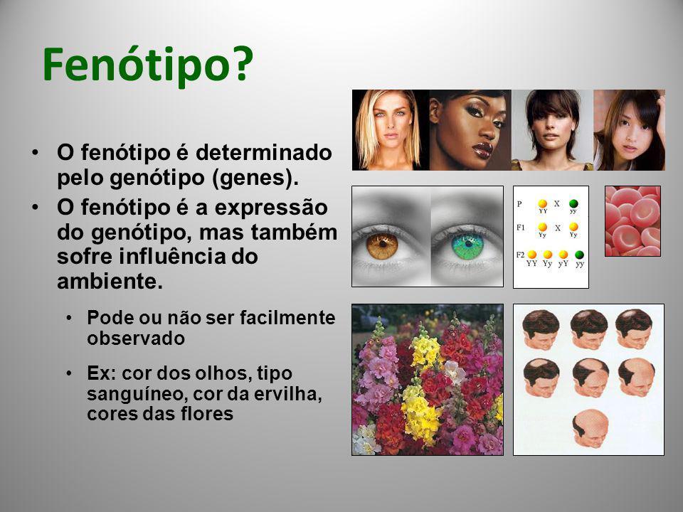 Fenótipo? O fenótipo é determinado pelo genótipo (genes). O fenótipo é a expressão do genótipo, mas também sofre influência do ambiente. Pode ou não s