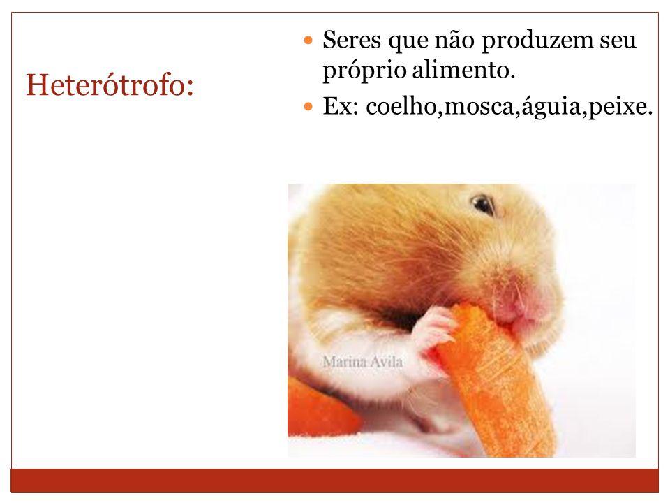 Heterótrofo: Seres que não produzem seu próprio alimento. Ex: coelho,mosca,águia,peixe.