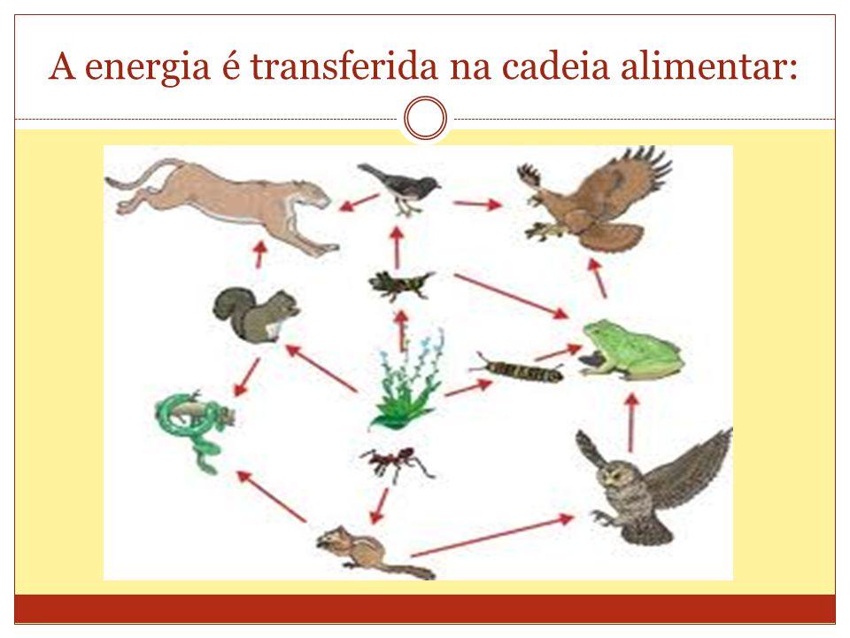 A energia é transferida na cadeia alimentar: