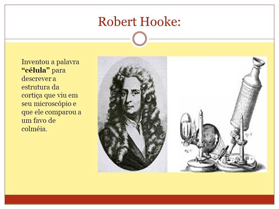 Robert Hooke: Inventou a palavra célula para descrever a estrutura da cortiça que viu em seu microscópio e que ele comparou a um favo de colméia.
