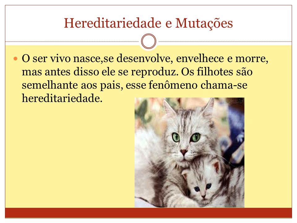 Hereditariedade e Mutações O ser vivo nasce,se desenvolve, envelhece e morre, mas antes disso ele se reproduz.
