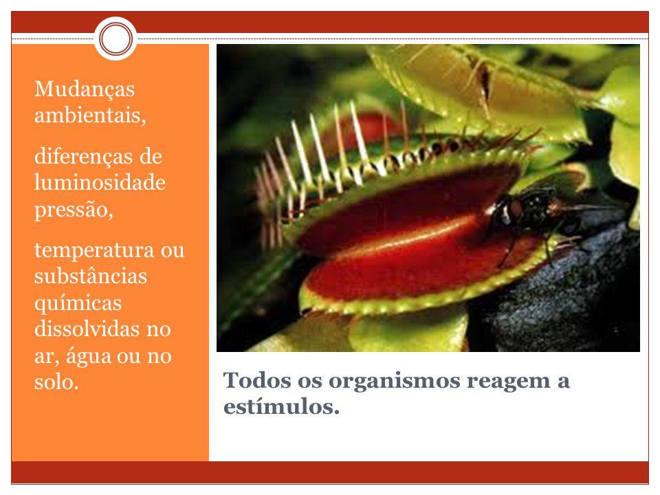 Todos os organismos reagem a estímulos.
