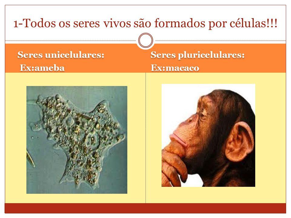 Seres unicelulares: Ex:ameba Seres unicelulares: Ex:ameba Seres pluricelulares: Ex:macaco Seres pluricelulares: Ex:macaco 1-Todos os seres vivos são formados por células!!!