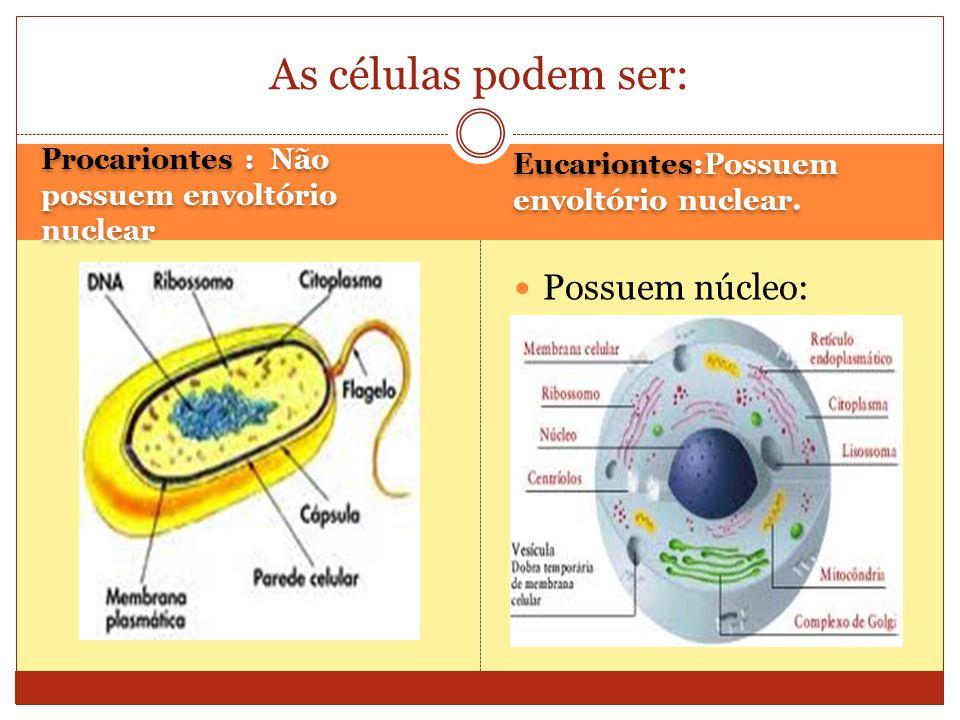 Procariontes : Não possuem envoltório nuclear Eucariontes:Possuem envoltório nuclear.