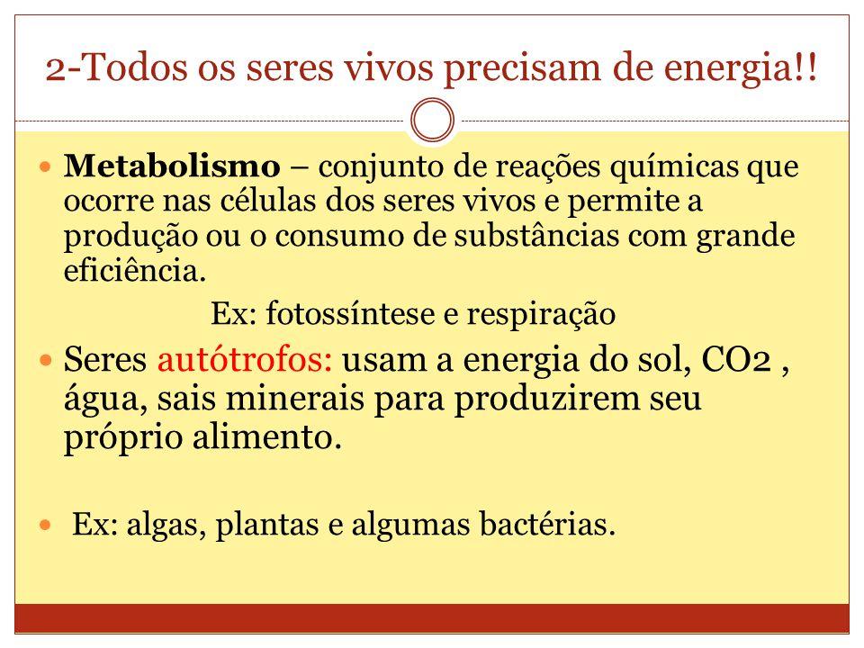 2-Todos os seres vivos precisam de energia!.