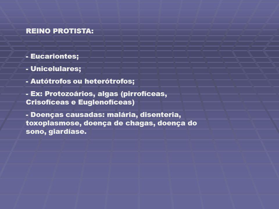 REINO PROTISTA: - Eucariontes; - Unicelulares; - Autótrofos ou heterótrofos; - Ex: Protozoários, algas (pirrofíceas, Crisofíceas e Euglenofíceas) - Do