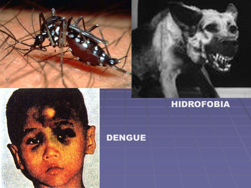 HIDROFOBIA DENGUE