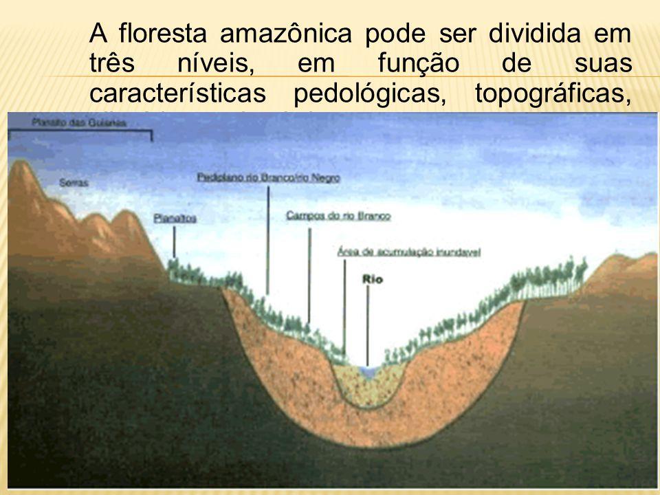 c) entrada de sistemas frontais vindos da região S/SE do Brasil * Friagens: efeito destas invasões de ar polar na Amazônia durante os meses de maio à