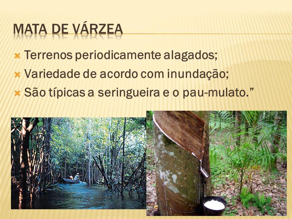 Solos alagados em terrenos baixos / hidrófilas. Aparecem muitos arbustos e cipós. Surgem as epífitas (se fixam sobre uma árvore hospedeira).