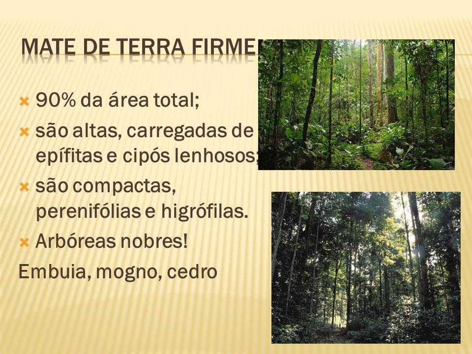Terrenos periodicamente alagados; Variedade de acordo com inundação; São típicas a seringueira e o pau-mulato.