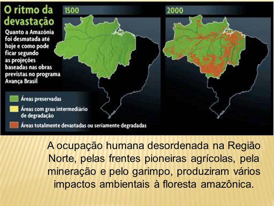 90% da área total; são altas, carregadas de epífitas e cipós lenhosos; são compactas, perenifólias e higrófilas. Arbóreas nobres! Embuia, mogno, cedro