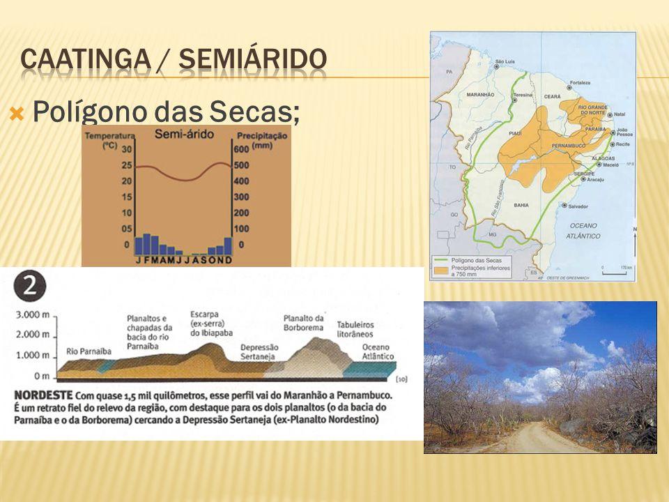 I. Pavimentação de rodovias para levar a soja até o rio Amazonas, por onde será escoada. II. Apoio à produção de fármacos, extratos e couros vegetais.
