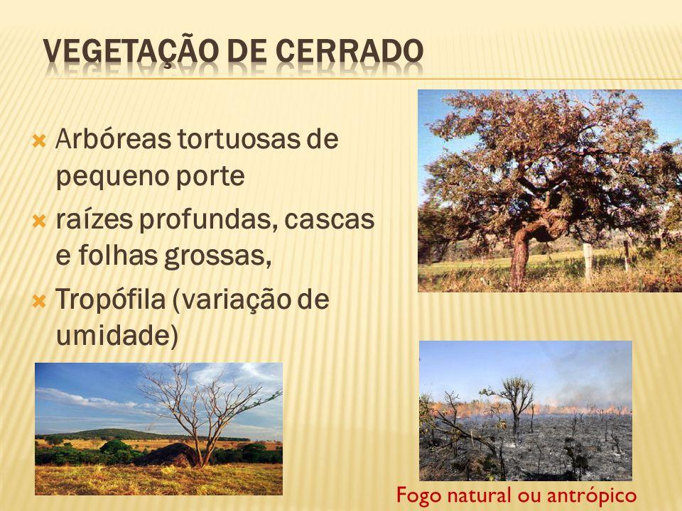 O clima é o tropical típico; Sujeita a fogo sazonal Obs. É o domínio mais Ameaçado atualmente no Brasil!!!