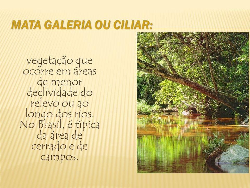 Fogo natural ou antrópico Arbóreas tortuosas de pequeno porte raízes profundas, cascas e folhas grossas, Tropófila (variação de umidade)