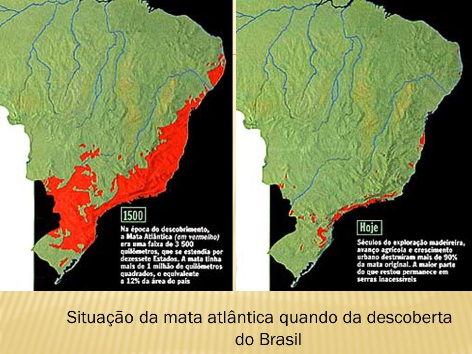 Clima tropical úmido Ombrófila Densa; Perenes e latifoliada; 3 estratos: Arbóreas (Ipê, Pau Brasil...) Arbustos e epífitas; Herbáceas;