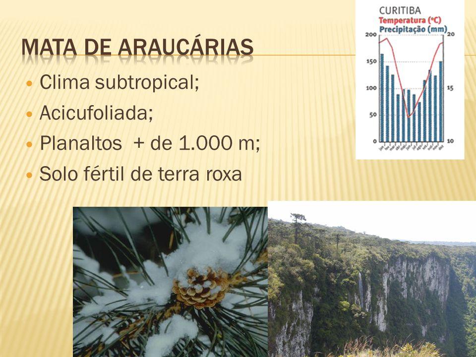 Clima subtropical; Acicufoliada; Planaltos + de 1.000 m; Solo fértil de terra roxa