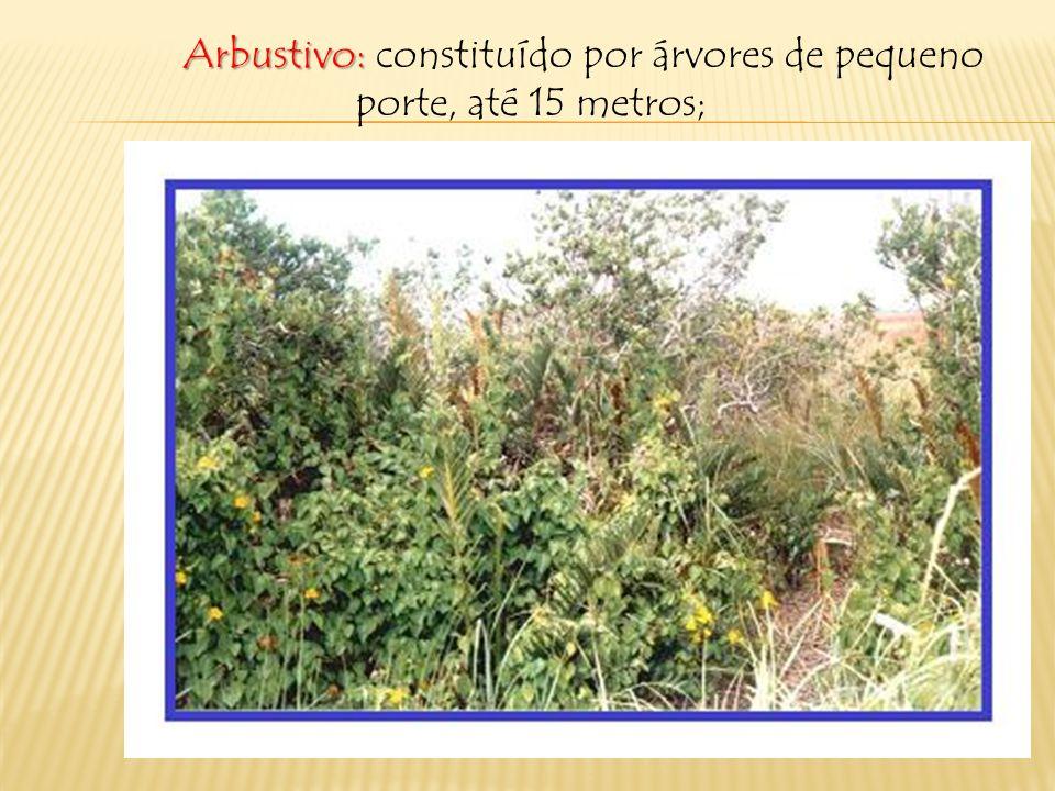 Existem os seguintes estratos: Herbáceo: formado principalmente por gramíneas;