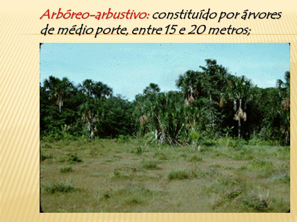 Arbustivo: Arbustivo: constituído por árvores de pequeno porte, até 15 metros;