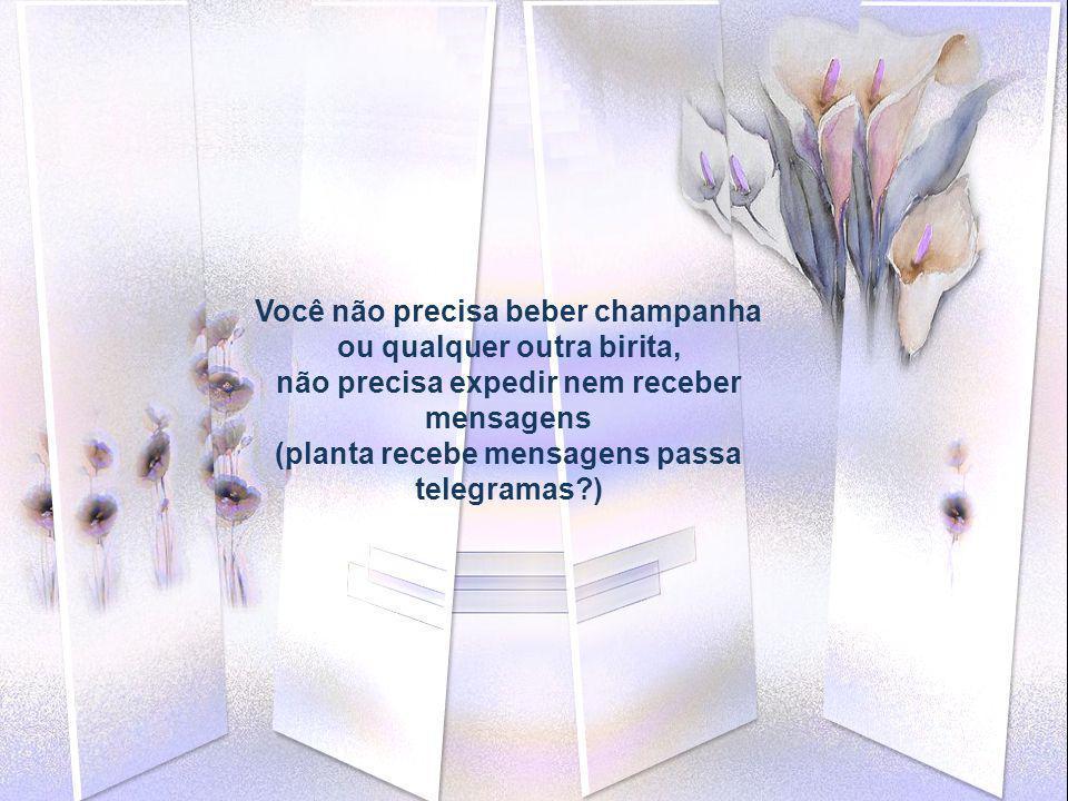 Você não precisa beber champanha ou qualquer outra birita, não precisa expedir nem receber mensagens (planta recebe mensagens passa telegramas?)