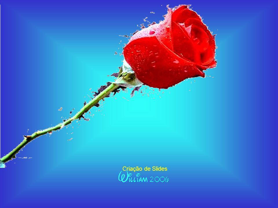 A tire você, quando tudo for pedra, A tire você, quando tudo for pedra, a primeira e decisiva flor... a primeira e decisiva flor... Criação de Slides