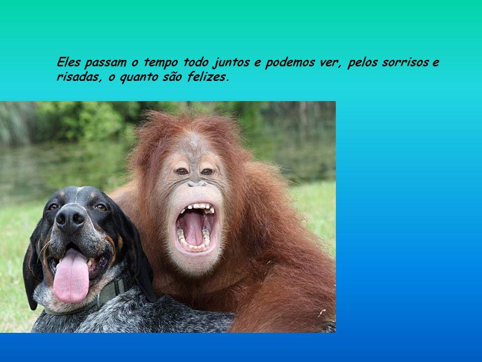 O orangotango encontrou uma nova razão para viver e se esforça ao máximo para fazer seu novo amigo acompanhá-lo em suas atividades. Eles vivem no nort