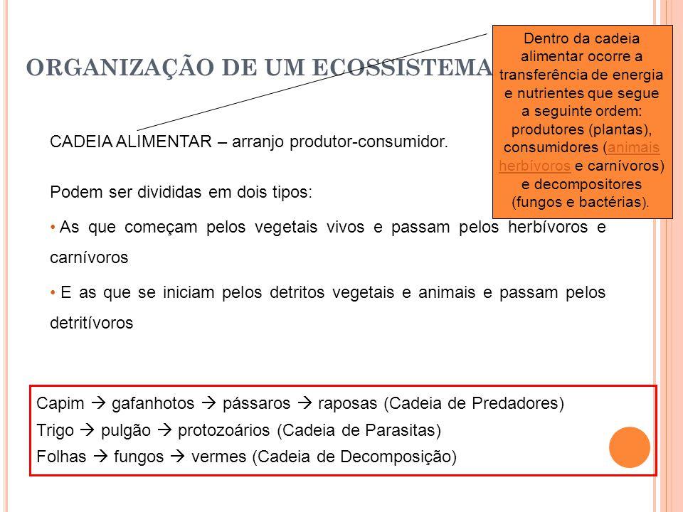 ORGANIZAÇÃO DE UM ECOSSISTEMA CADEIA ALIMENTAR – arranjo produtor-consumidor.