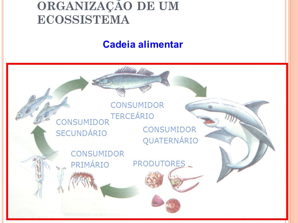 ORGANIZAÇÃO DE UM ECOSSISTEMA Cadeia alimentar PRODUTORES CONSUMIDOR PRIMÁRIO CONSUMIDOR SECUNDÁRIO CONSUMIDOR TERCEÁRIO CONSUMIDOR QUATERNÁRIO