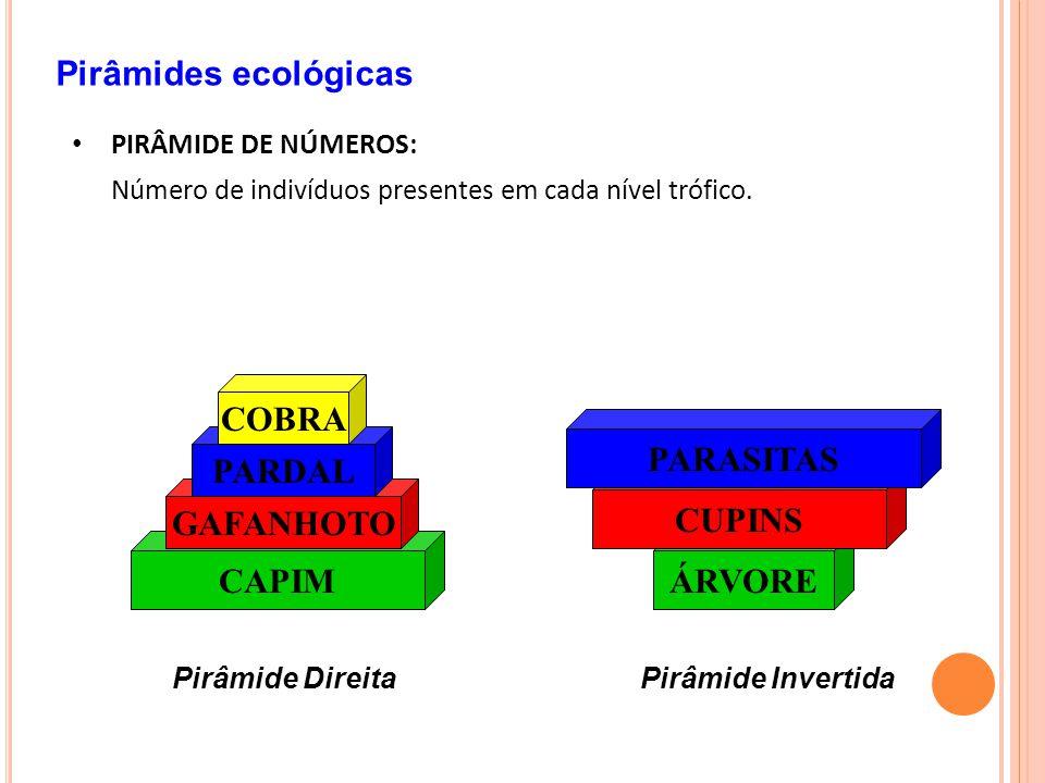Pirâmides ecológicas PIRÂMIDE DE NÚMEROS: Número de indivíduos presentes em cada nível trófico.