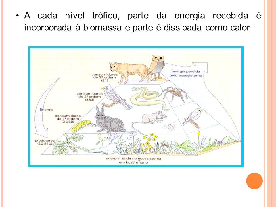 A cada nível trófico, parte da energia recebida é incorporada à biomassa e parte é dissipada como calor