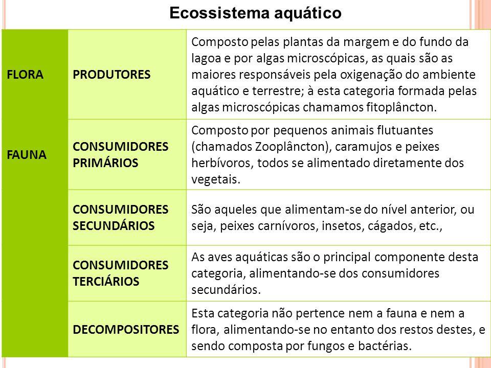 FLORAPRODUTORES Composto pelas plantas da margem e do fundo da lagoa e por algas microscópicas, as quais são as maiores responsáveis pela oxigenação do ambiente aquático e terrestre; à esta categoria formada pelas algas microscópicas chamamos fitoplâncton.