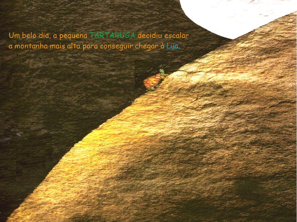 Vista lá de cima, a Lua estava mais próxima, mas a TARTARUGA ainda não conseguia tocá-la.